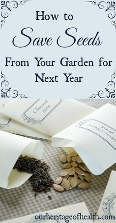How to save seeds from your garden for the next year | http://ourheritageofhealth.com