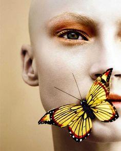 Butterfly Bald