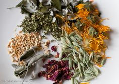 Can you identify all these herbs? Online Intermediate Herbal Apprenticeship to learn what they are and how they're used!