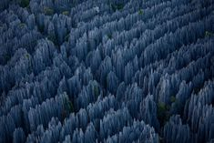 39 Awesome Nature Photos Of Incredible Places Stone Forest in Madagascar