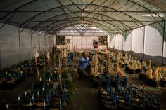 How a Seed Bank, Almost Lost in Syria's War, Could Help Feed a Warming Planet