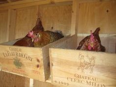 Post Pictures of Your Creative Nesting Boxes I might have to find a way to use wine crates for my nesting boxes.I might have to find a way to use wine crates for my nesting boxes.