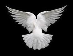 """""""Le coeur de l'homme est comme un oiseau enfermé dans la cage du corps."""" Eric-Emmanuel Schmitt"""