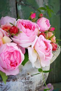 Phonies flowers