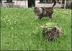 Camouflaged cat. - http://www.seethisordie.com/startledcats/camouflaged-cat/ #animals #cats #funny #fun