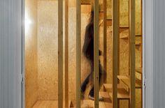 nelson resende CASA EM OVAR | Ivo Tavares Studio | fotografia de arquitectura