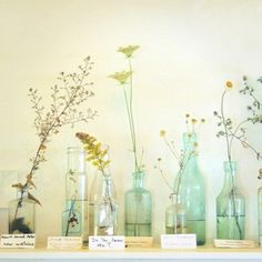 Love the humbleness and simplicity of this arrangement, the smart variety of shapes and sizes of both bottles and plants. Good feng shui decor for East or Southeast bagua areas http://fengshui.about.com/od/glossaryofterms/g/bagua.htm of your home, as well as anywhere you need a reminder that very little is needed to be content and happy :)
