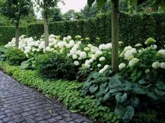 50 Beautiful Long Driveway Landscaping Design Ideas 26 #Landscaping Design Ideas