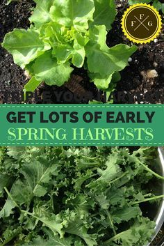 Spring Garden Early Planting Guide For Home Gardens 400 x 300