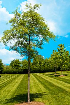 fotogrph treeling