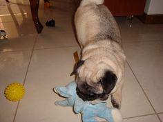 3) Thor com 4 meses