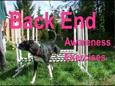 ▶ 22 Rear End Awareness Exercises for Dogs in Agility, Freestyle, Rally Obedience etc. - YouTube
