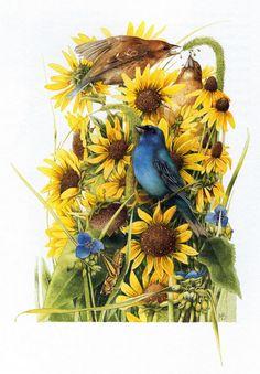 Web Idea 40: [FunOnTheNet] Marjolein Bastin > Pájaros / Marjolein ...