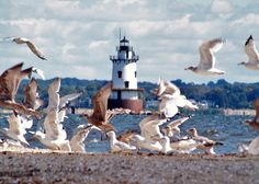 Seagulls at Conimicut Point Lighthouse, Warwick Rhode Island