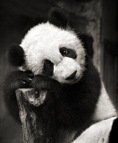 Those panda eyes.