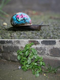 Inner City Snails: Graffiti Humanizes The Urban Mollusc | WebEcoist