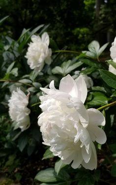 Annabelle bloemen porno