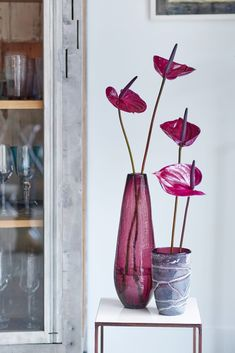 Anthurium flowers in the Pantone color of the year Ultra Violet