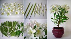 Rhododendron - Rododendron, Havasszépe https://www.facebook.com/Csodavirag