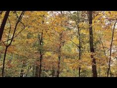 Top Ten Best Songs for Autumn | these are actually quite nice