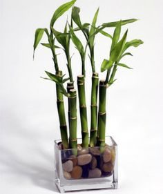 whatcha all think of bamboo centerpieces « Weddingbee Boards
