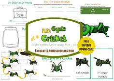Make learning all about crickets easy with my new FREE pack that helps your children learn all about the life cycle of a cricket with the Life Cycle of a Cricket Pack Inspired by The Cat in the Hat Knows A Lot About That! Bugs and Beyond DVD from NCircle Entertainment.