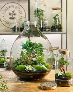 Garden Terrarium, Succulent Terrarium, Terrarium Ideas, Water Plants Indoor, Indoor Garden, House Plants Decor, Plant Decor, Plants In Jars, Plants Are Friends