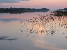 #Kesä #Ilta #Suomi #Rantasalmi #Järvi #Kaislat #Peillityyni #Valokuvaus #Summer #Evening #Finland #Lake #Reeds #Fotography