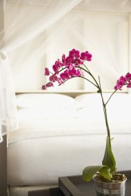 Serene Bedrooms | criss cross netting- Love it!