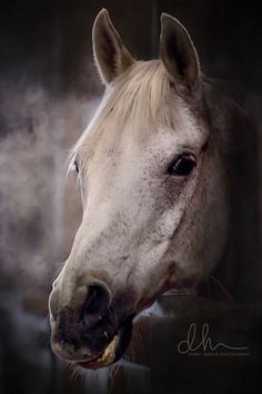 An old horse is a majestic horse by Debby Armstrong Herold on 500px