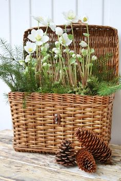 VIBEKE DESIGN - I have so many baskets in the storage room. I need to remember to get them out and plant them.place them around the house, patio, sunroom. It looks so fresh and inviting. Vibeke Design, Deco Floral, Flower Basket, Cool Ideas, Wicker Baskets, Garden Inspiration, Garden Art, Container Gardening, House Plants