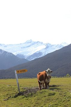 Near Wanaka, NZ - A quintessential NZ scene!