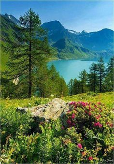 Switzerland , Swiss Alps