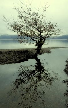 Tree Reflections by Samantha Nicol Reflection, River, Explore, Outdoor, Buddhism, Outdoors, Outdoor Games, The Great Outdoors, Rivers