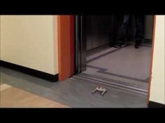 Watch the Acrobatics of STAR.V3 , UC Berkeley's high speed 3D printed robot which climbs up doors