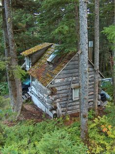 Mossy log cabin in Girdwood, Alaska