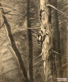 Roman Kazimierz KOCHANOWSKI ● DZIĘCIOŁ ●rysunek kredką, gwasz, 25,5 x 21,5 cm