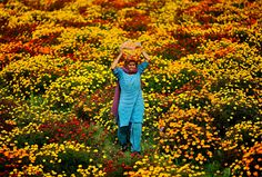 Photo of the Day: Marigold Fever