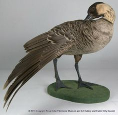 Hawaiian Goose - The Hawaiian goose is endemic to the Hawaiian Islands, and hence this specimen collected in Europe was almost certainly a captive-bred bird. It is the official bird of the state of Hawaii where its common name, Nene, relates to its soft call. - Royal Albert Memorial Museum & Art Gallery, Exeter