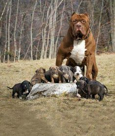 Don't mess with mama!