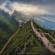 . Daluen Shan (大崙山) Mt Daluen Tea Garden , Lugu county, Nantou township, Taiwan Shot by @halimzen Please kindly visit his amazing gallery for more ☑️@halimzen☑️ ➖➖➖➖➖➖➖➖➖➖➖➖➖➖➖ Please tag #nala_rinaldo to have a chance for my Friends Spotlight