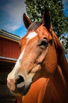 Horse by Nancy86 on ViewBug