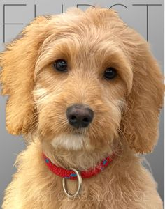 Dog Grooming Salons, Cockapoo Puppies, Luxury Spa, Photo Galleries, Gallery, Dogs, Animals, Animales, Roof Rack