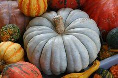 heirloom pumpkins - instead of fall bouquets