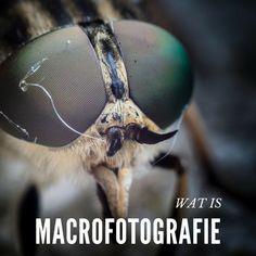 Wat is Macrofotografie - Moor Fotografie Dslr Nikon, Nikon D5200, Macro Fotografie, Camera Hacks, Camera Tips, Photoshop Tutorial, Clipart, Photoshop Elements, Photography Tips