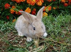 RT @Bunny Buddhism: To be a happy bunny, one must avoid what prevents happiness.