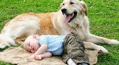 قصة الكلب الوفى , قصة مؤثرة ومعبرة وحزينة جدا Romantic Pictures, Animals, Animales, Animaux, Animal, Animais, Dieren