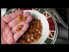 Vitamin Laetrile : The greatest cover-up in the history of cancer cure! How laetrile works, and how to eat apricot seeds for cancer . Cancer Treatment, Natural Treatments, Natural Cancer Cures, Natural Cures, Natural Healing, Apricot Seeds, Vitamin B17, Cancer Fighting Foods, Health
