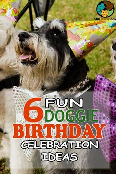 Should you have a doggie pawty or spend the entire day with your pet at the beach? Let these dog birthday party ideas help you make your dog's day special! Dog First Birthday, Puppy Birthday, Animal Birthday, Dog Games, Puppy Party, Old Dogs, Dog Lover Gifts, Dog Mom, Dog Training
