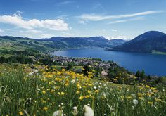 Der Ägerisee im Sommer. Bern, Best Memories, Oh The Places You'll Go, Switzerland, Earth, Mountains, Nature, Pictures, Travel